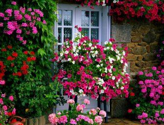 Jak zrealizować marzenie o pięknym ogrodzie, gdy jedyne co u Ciebie kwitnie to aloes?